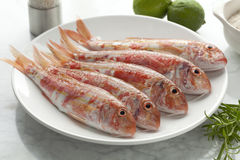 Fresh striped red mullets. On a dish stock images
