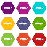 Fresh sturgeon fish icon set color hexahedron. Fresh sturgeon fish icon set many color hexahedron isolated on white vector illustration Royalty Free Stock Photos