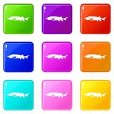 Fresh sturgeon fish icons 9 set. Fresh sturgeon fish icons of 9 color set isolated vector illustration Stock Images