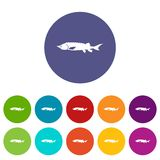 Fresh sturgeon fish set icons Stock Photo