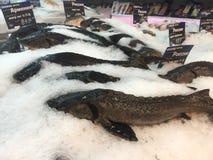 Fresh sturgeon on store shelves Royalty Free Stock Photo