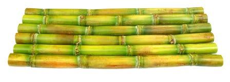 Fresh Sugar Cane Stock Photography