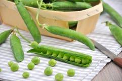 Fresh Sugar Pea Stock Images