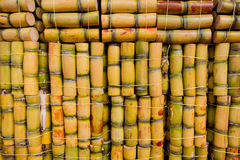 Fresh sugarcane. Piles of fresh sugarcane on market ready to eat Royalty Free Stock Image