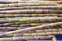 Fresh sugarcane in Delhi bazaar, India Royalty Free Stock Photo