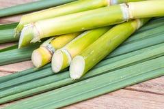 Fresh sugarcane Stock Photography