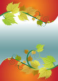 Fresh summer or autumn vector background with leaves Royalty Free Stock Images