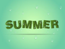 Fresh summer background, grass and water drops. Royalty Free Stock Photo