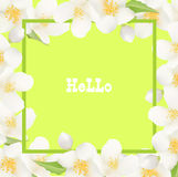 Fresh Summer Background with Jasmine White Flowers. Design Eleme. Nt for Greeting Cards, Invitations, Announcements, Advertisements, Vouchers, Weddings. Vector Royalty Free Stock Photography