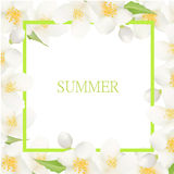 Fresh Summer Background with Jasmine White Flowers. Design Element for Greeting Cards, Invitations, Announsements, Adverticements, Stock Photo
