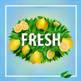 Fresh summer banner Royalty Free Stock Images