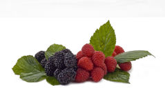 Fresh summer berries Royalty Free Stock Photography