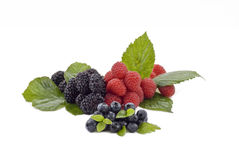 Fresh summer berries Stock Images
