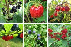 Fresh summer berry collection. Summer mosaic. Forest and garden Royalty Free Stock Photography