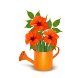 Fresh summer flowers growing in a watering can. Royalty Free Stock Images
