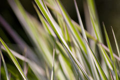 Fresh summer grass Royalty Free Stock Photography
