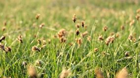 Fresh summer grass on wind stock video footage