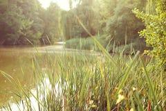 Fresh summer green grass background; sunny pond and forest; sele. Fresh summer green grass in sunlight; sunny pond and forest background Stock Photography
