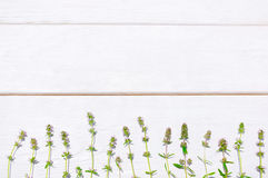 Fresh summer herbs, white wooden background, void Stock Image