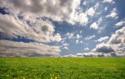 Fresh summer landscape. With meadow and sky Stock Photos