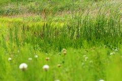 Fresh summer meadow Stock Photos