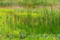 Fresh summer meadow Royalty Free Stock Photo