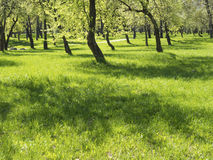 Fresh summer meadow Royalty Free Stock Photography