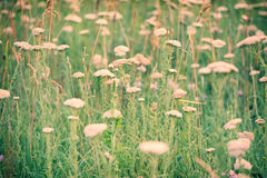Fresh summer meadow with tiny flowers Stock Image