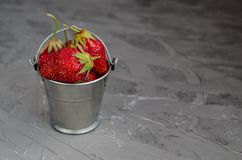 Fresh summer ripe strawberries in a small bucket on a gray concrete background. Lit by the bright sun. Gray background royalty free stock photography