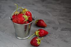 Fresh summer ripe strawberries in a small bucket on a gray concrete background. Lit by the bright sun. Gray background royalty free stock image