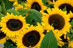 Fresh Sun Royalty Free Stock Photography