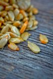 Fresh sunflower seed Stock Image
