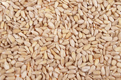 Fresh sunflower seeds Stock Images