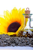 Fresh Sunflower seeds Stock Photos