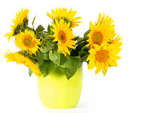 Fresh sunflowers in a green pot Stock Photo