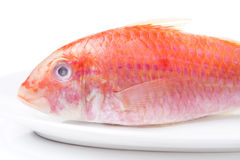 Fresh surmullet on a plate close-up. Horizontal Stock Images