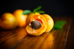 Fresh sweet apricots Stock Photography