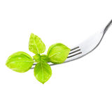 Fresh Sweet Basil leaf on fork isolated on white background cuto Royalty Free Stock Photo