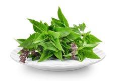 Fresh Sweet Basil  in plate on white background. Sweet Basil  in plate on white background Stock Photos