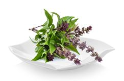 Fresh Sweet Basil in a plate on white background. Sweet Basil in a plate on white background Stock Photos