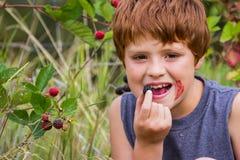 Fresh sweet blackberries Stock Photos