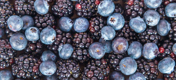 Fresh sweet blueberries and blackberries. On white background Royalty Free Stock Images