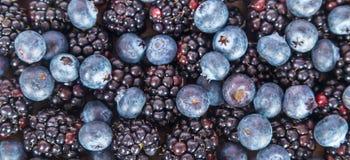 Fresh sweet blueberries and blackberries Royalty Free Stock Images