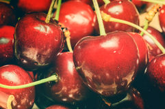 Fresh sweet cherry Royalty Free Stock Image