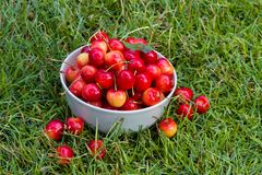 Fresh sweet cherry fruits Royalty Free Stock Photo