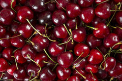 Fresh and sweet cherry Royalty Free Stock Image