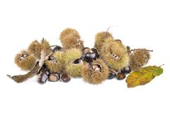 Fresh sweet chesnuts and shells stock images