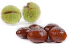 Fresh sweet chestnuts Stock Photo