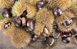 Fresh sweet chestnuts on a plank royalty free stock images