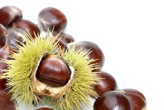 Fresh sweet chestnuts on pure white Stock Photography